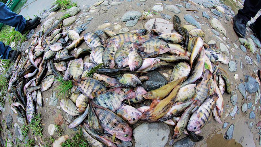 Pescadores exigen a CONAGUA frene envenenamiento del río
